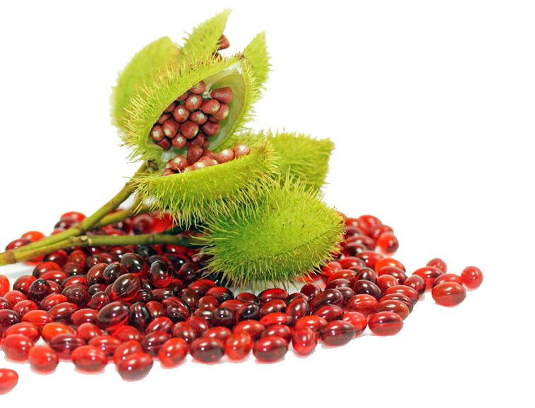 A png of the Annatto Plant surrounded by the bright red supplements it is used to create